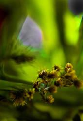 Underwater Flower by etereal