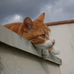 Rox - My cat