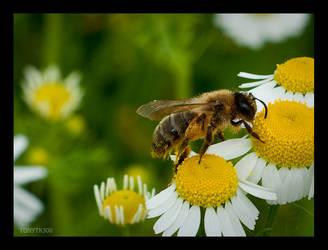 Stairway to pollen by TonyTK300