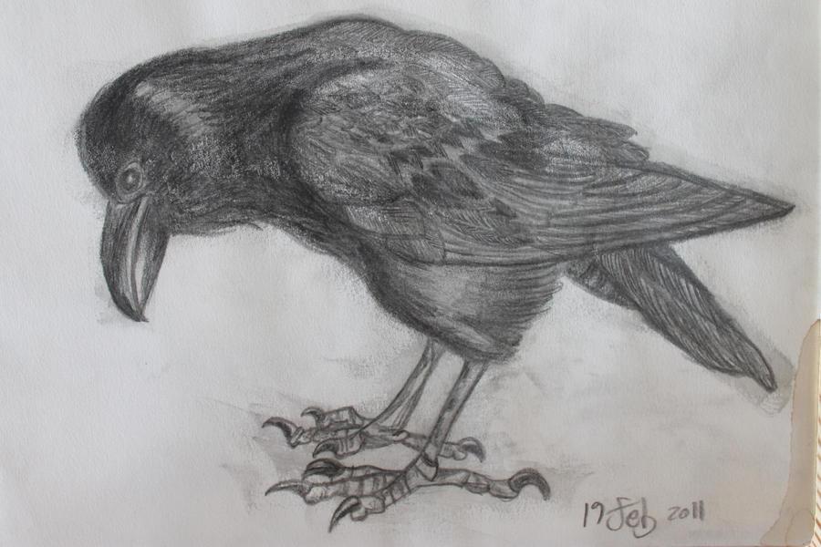 Corvus corax by FranciscaMeena