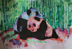 Two Panda
