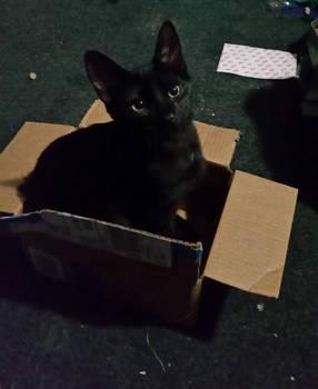Peter the Kitten
