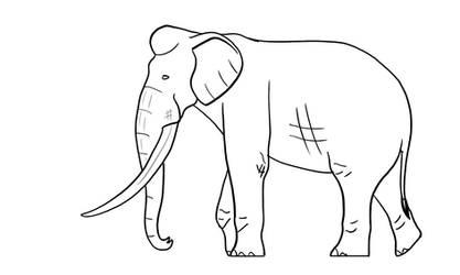 Straight Tusked Elephant Lineart