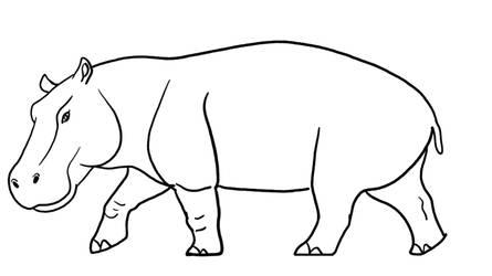 Hippopotomus Amphibius Line Base