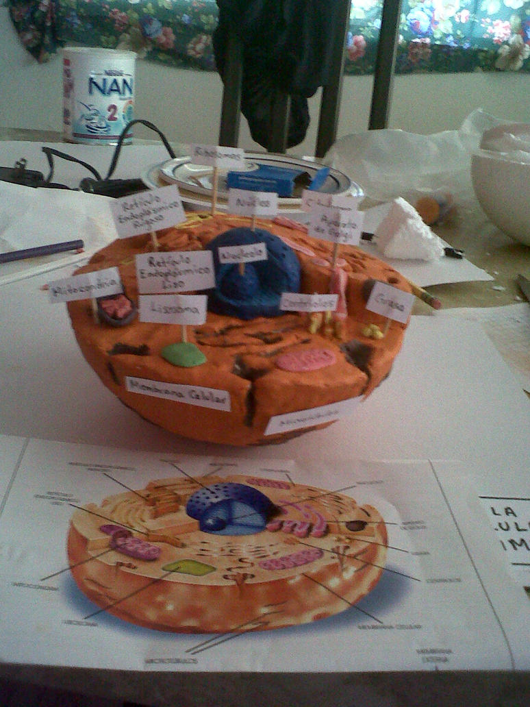 how to make an animal cell model out of styrofoam