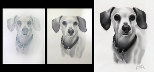 Dachshund Commissioned Drawing