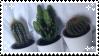 Cactus Baes