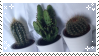 Cactus Baes by SourTeen666