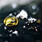 golden ash drop. by simoendli