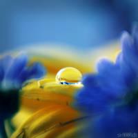 through the flowers. by simoendli