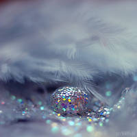 under the feather. by simoendli