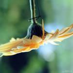 lampshade. by simoendli