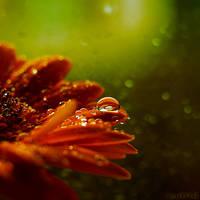 greenorange. by simoendli