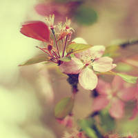 cherry cherry lady. by simoendli