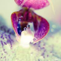 underwater world. by simoendli