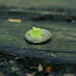 lucky stone.
