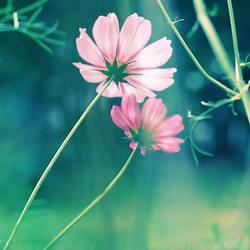garden cosmos. by simoendli