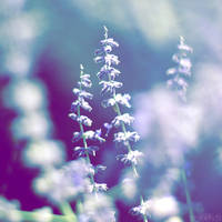 lavender ice. by simoendli