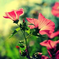 love the way you bloom. by simoendli