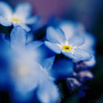 forget me.