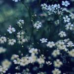 carpet of flowers.