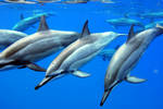 Blue Water Dolphins