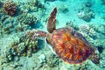 Turtle Glide