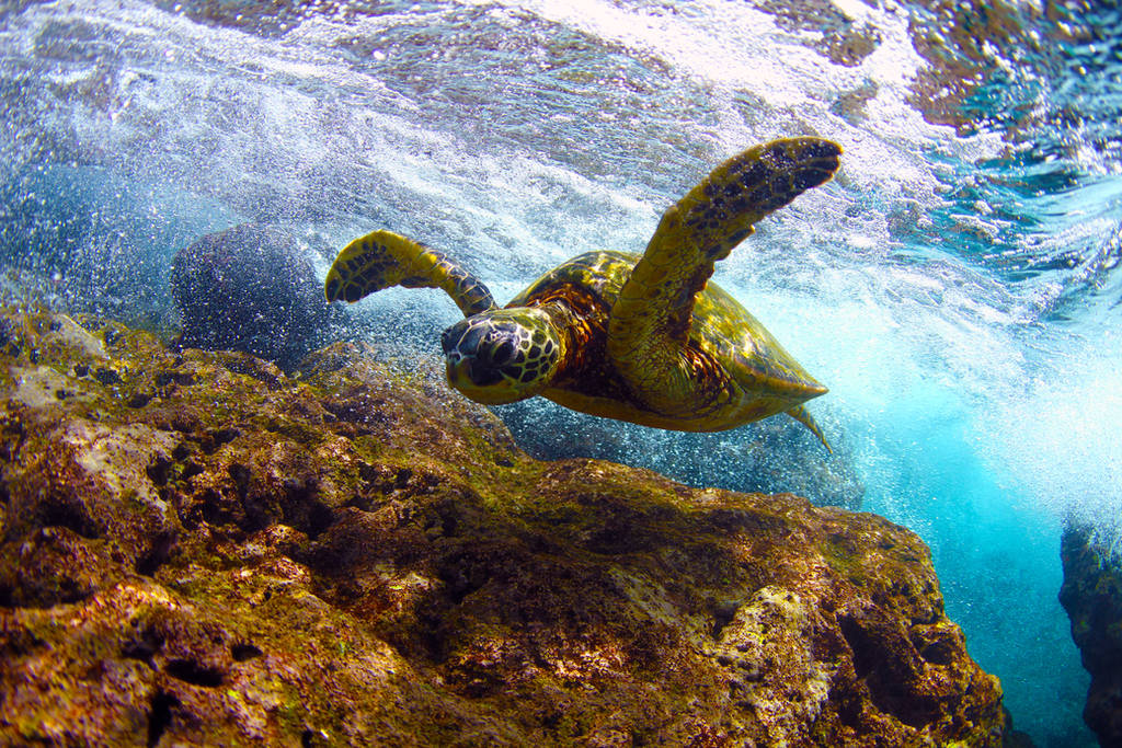 The Turtle by manaphoto
