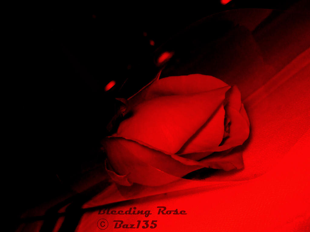 Bleeding Rose by Baz135
