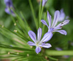 Blue Flower Photography