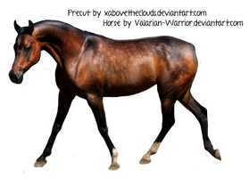 dapple bay arabian horse precut by xabovetheclouds