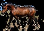 dapple bay arabian horse precut