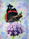 Red Admiral and Purpletop Vervain