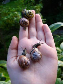 Hand full of snails.