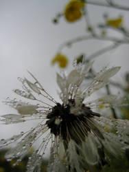 Rainy meadow.