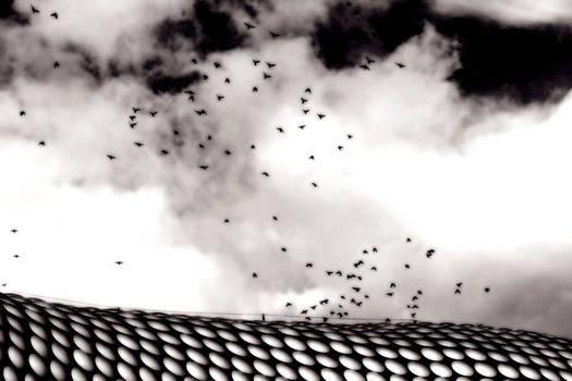Birds Over Selfridges