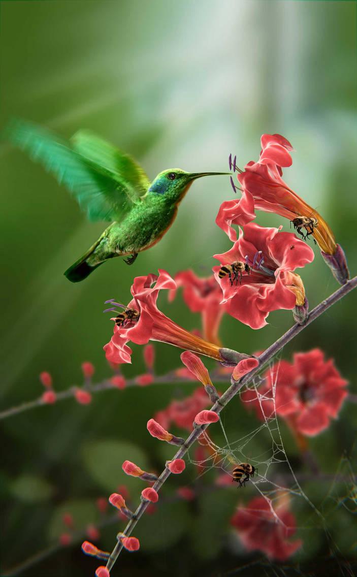 Colibri by GAMERAS