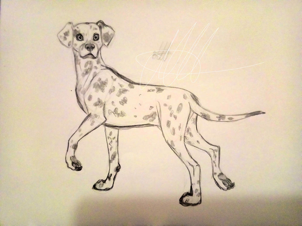 Random Dalmatian Sketch by BillieJean485