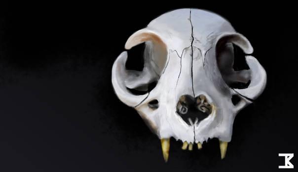 Cat Cranium, Anterior
