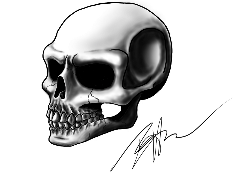 It is a picture of Exceptional Skull Profile Drawing