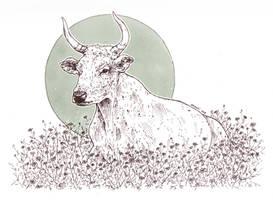 wild chamomile - inktober [day 26] by menuli