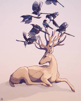 magpies on my mind