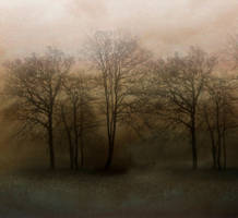 Premade Background 22 by StarsColdNight woods by StarsColdNight