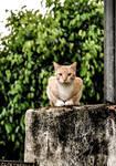 Orange cat stock