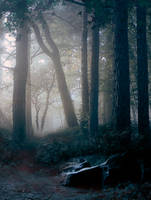 woods II PREMADE 2 by StarsColdNight