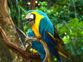 Bird Stock Yellow Blue by StarsColdNight
