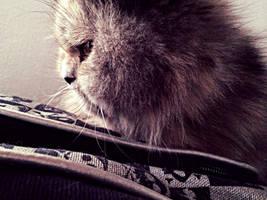 Kitty feb 2014 by StarsColdNight
