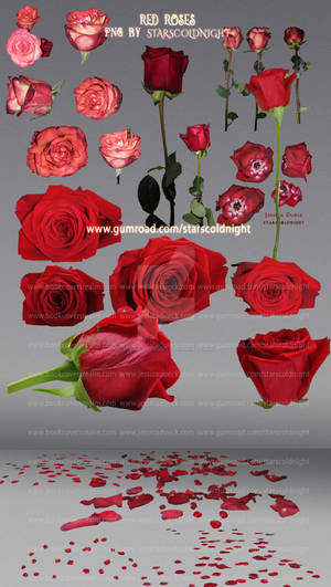 Red roses PNG files