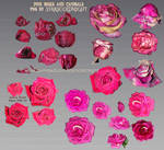 Pink Roses and Canibal flowers PNG files