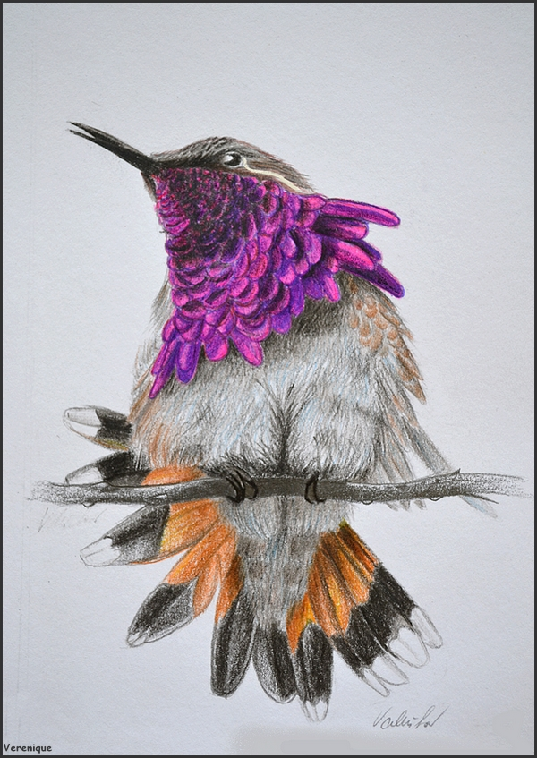 Bright hummingbird by Verenique